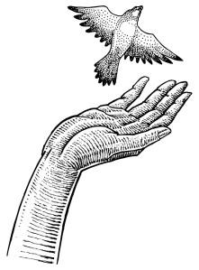 freedom.bird_.KeithBishop-755x1024